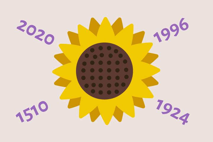 The history of sunflower [INFOGRAPHIC]
